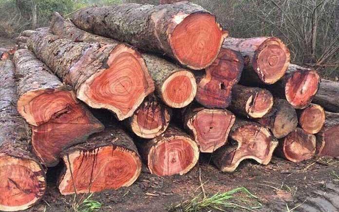 Giá gỗ hương bao nhiêu