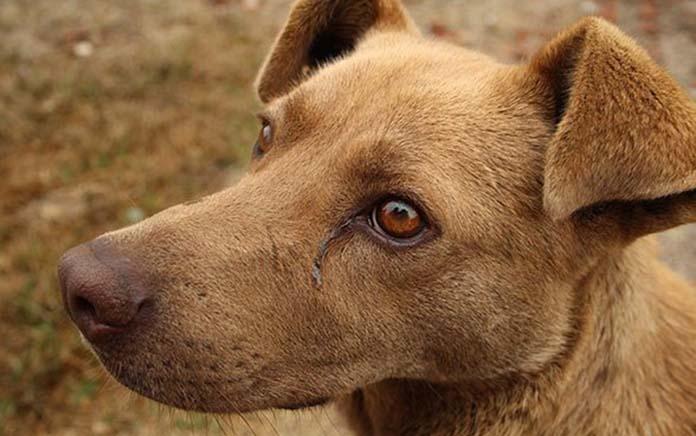 Tác hại của bả chó là gì